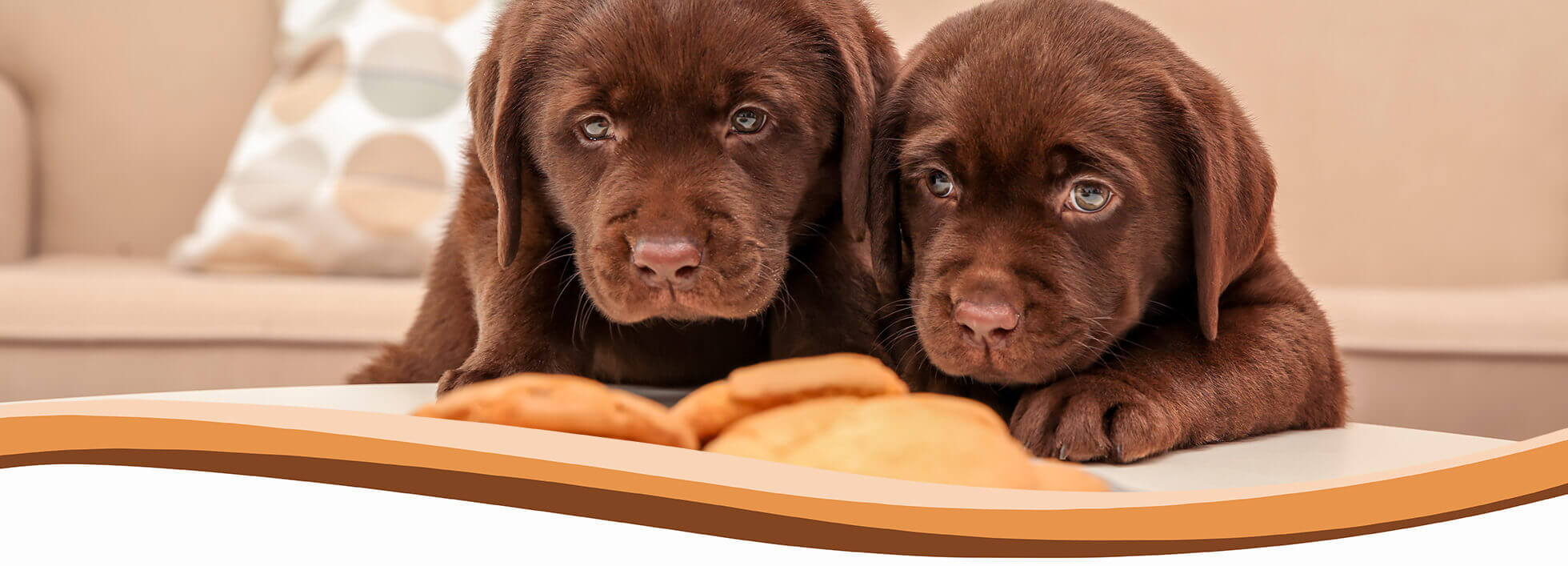 puppy, dog training, abingdon, wantage, didcot, harwell, steventon, oxford, wallingford