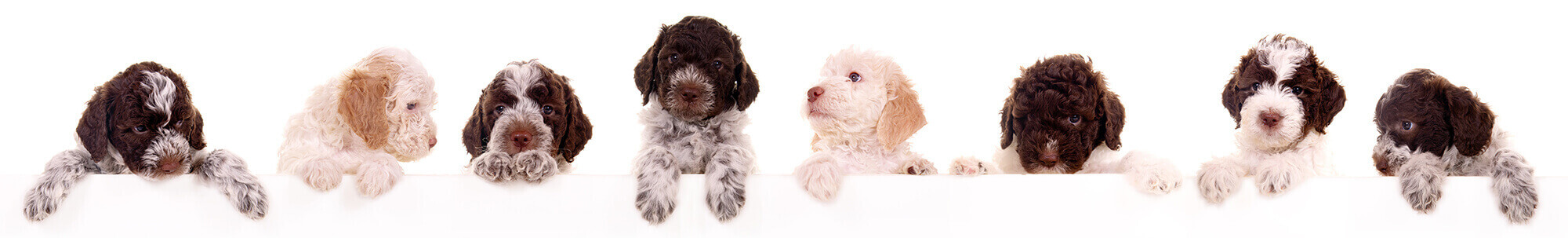 puppy and dog training, abingdon, wantage, didcot, harwell, steventon, oxford, wallingford
